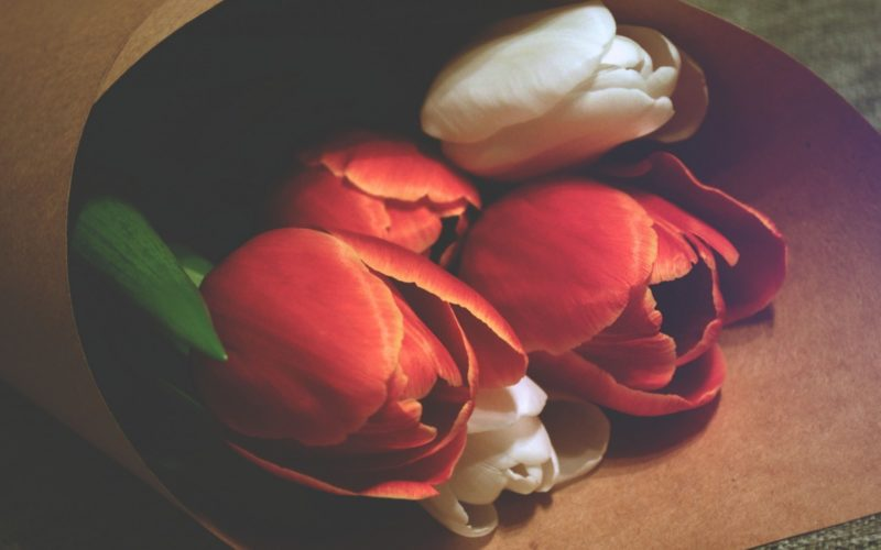 close-up-of-tulips-wrapped-in-paper-1